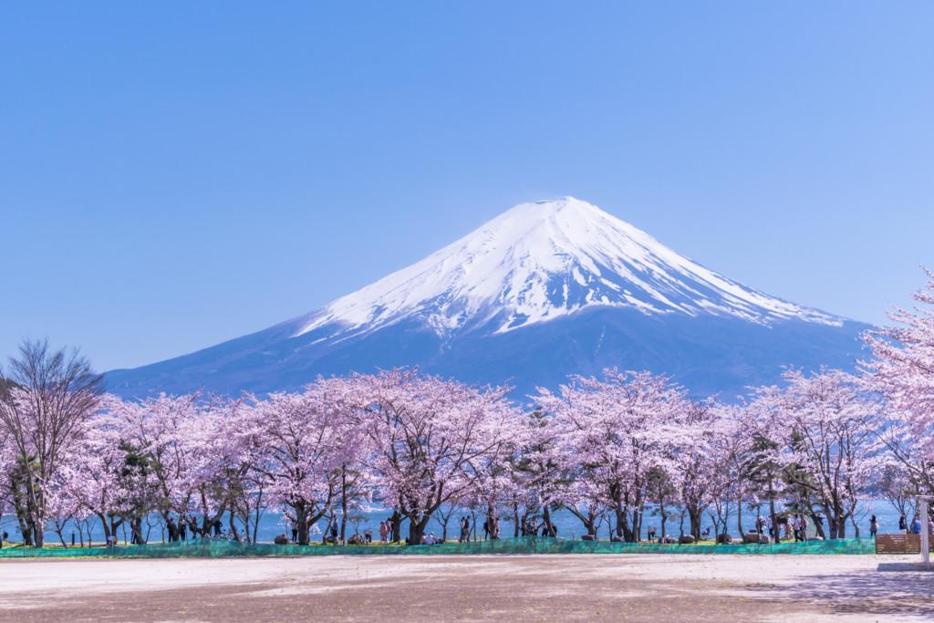 河口湖から観た富士山(桜の風景)